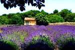 Histoire du Lavandou en Provence